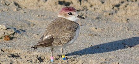 Christmas Bird.Carpinteria Christmas Bird Count Carp Without Cars